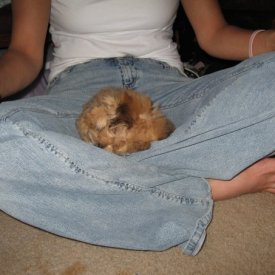 Bentley as a puppy shortly after we found eachother